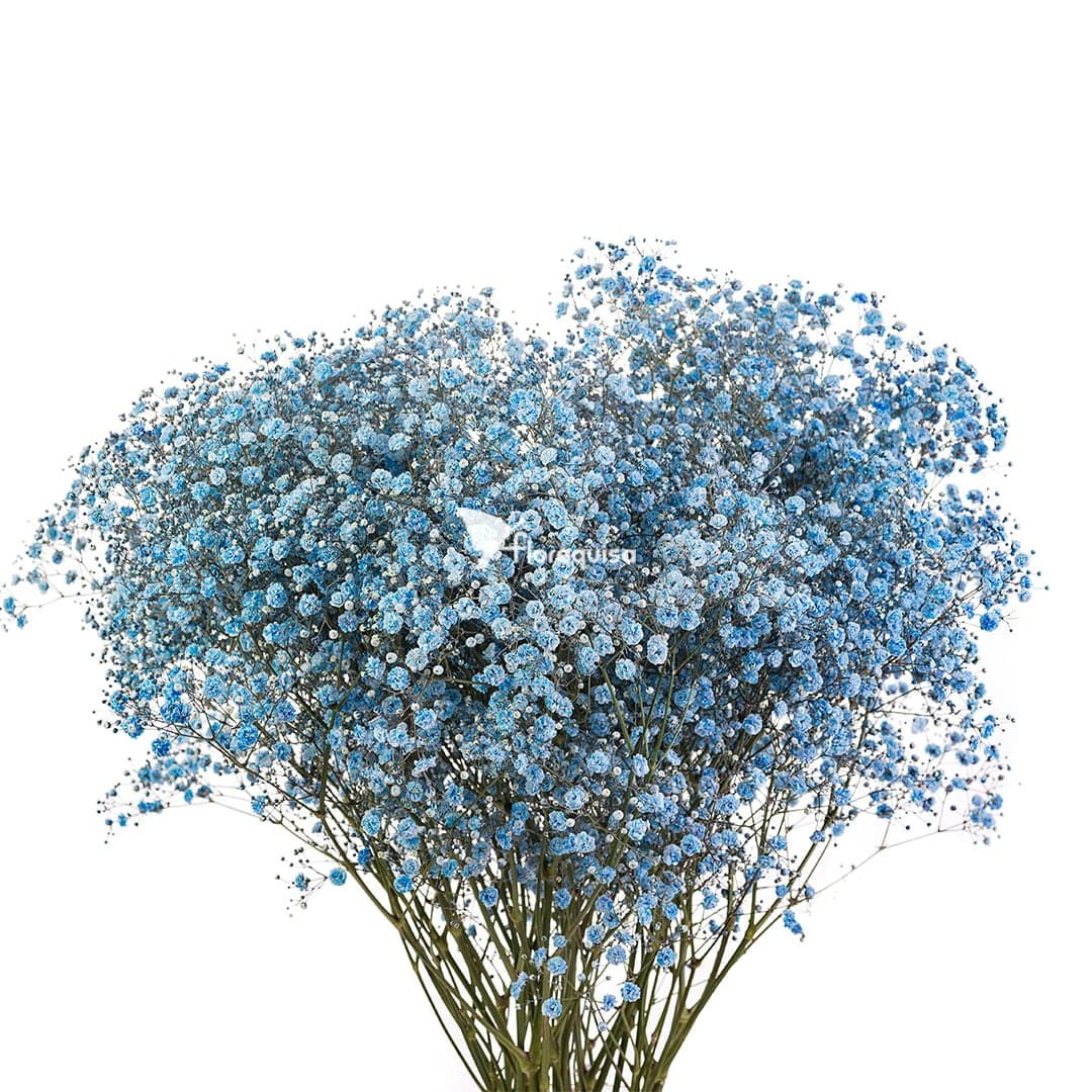 Light Blue Gypsophila by Florequisa Flower Growers