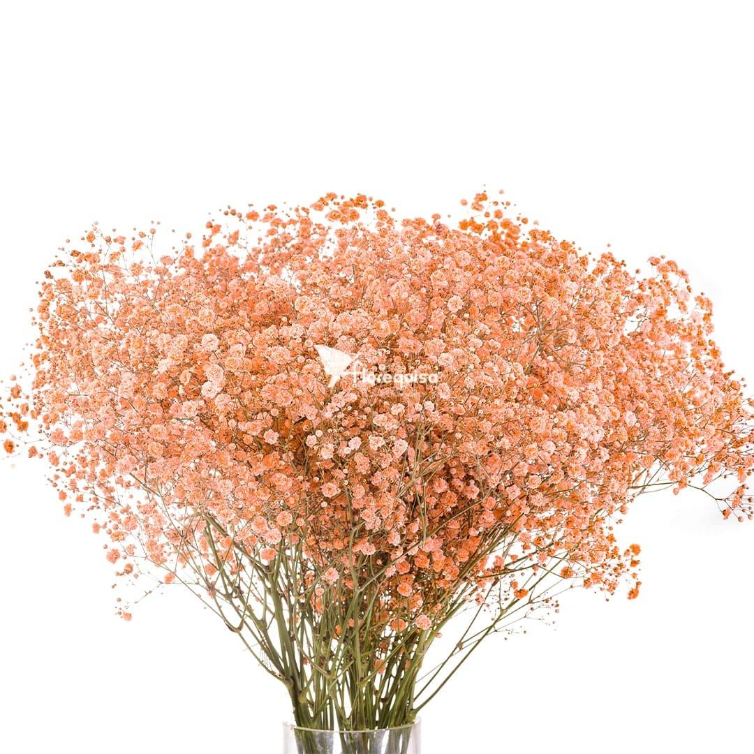 Light Orange Gypsophila by Florequisa Flower Growers