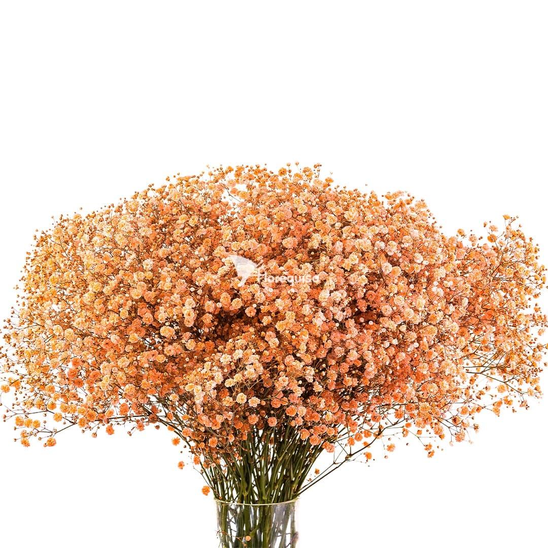 Orange Gypsophila by Florequisa Flower Growers
