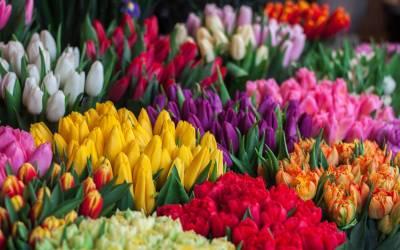 Holanda, el país de las flores