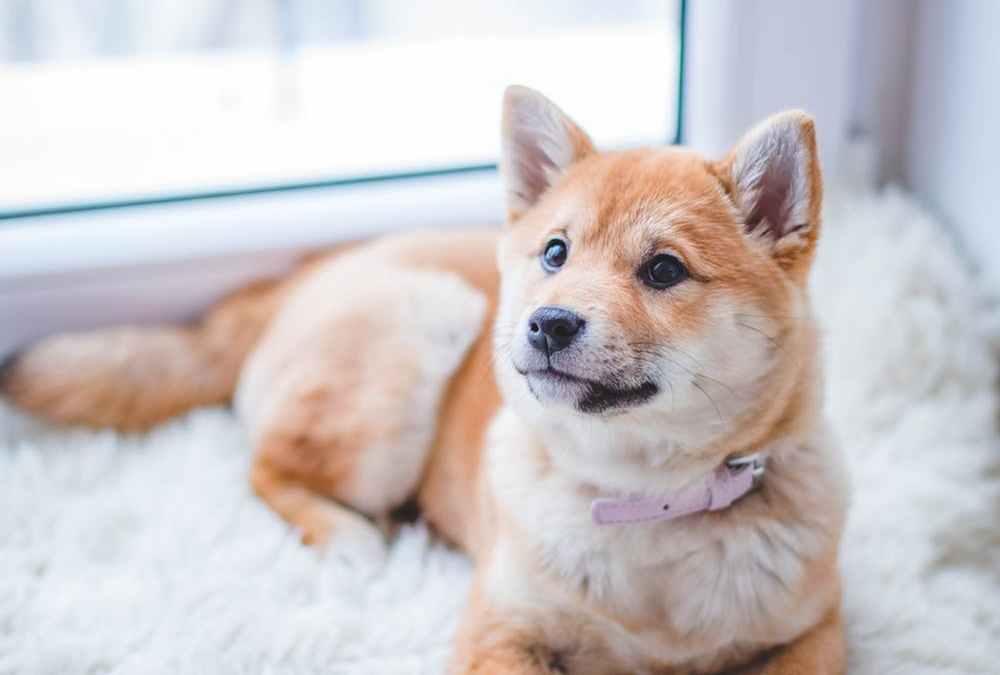 Cómo eliminar el olor a perro de tu casa