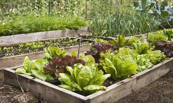 Como Cultivar Uma Horta No Canteiro Flores Cultura Mix