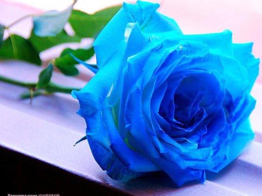 Imagenes De Lindas Rosas Azules para Compartir En Facebook