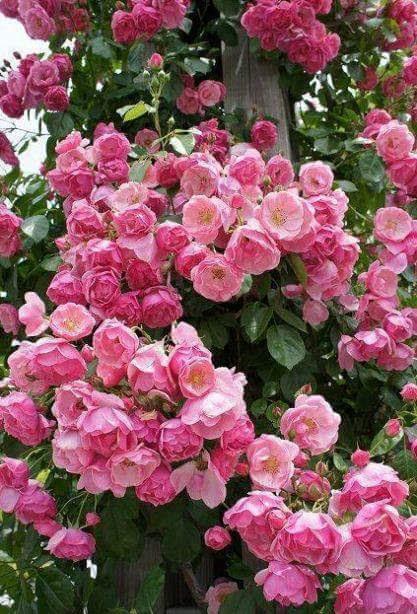 Lindas flores rosadas para el fondo de pantalla de tu celular
