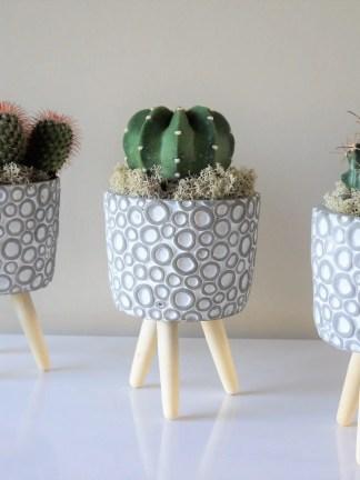 Colección cactus