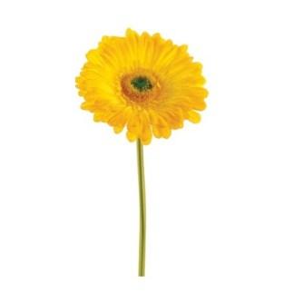 gerberas-amarillas