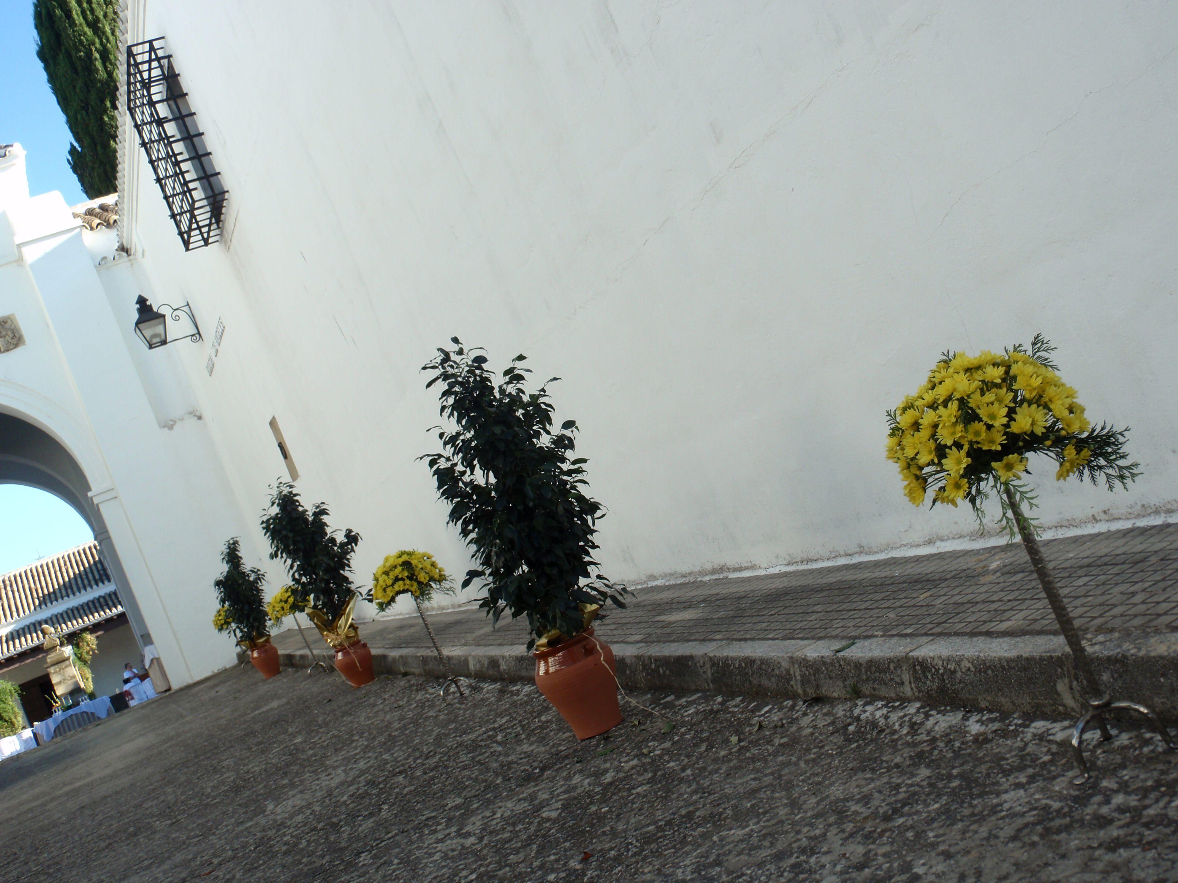 Decoración aire libre. Flores del Patio