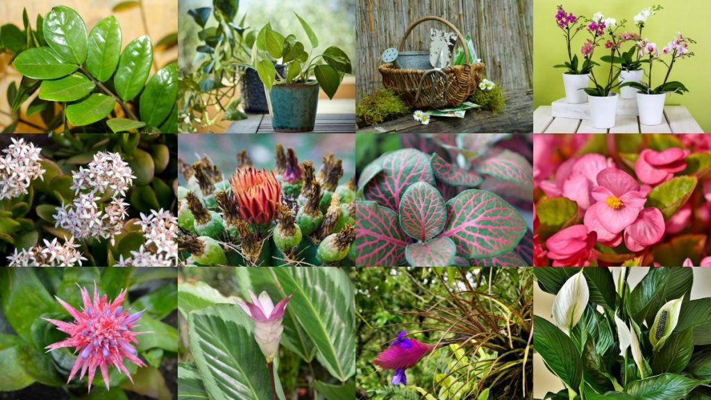 35 Best Indoor Plants How Grow Care And Maintain Florgeous