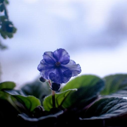 Как подготовить растения к зиме