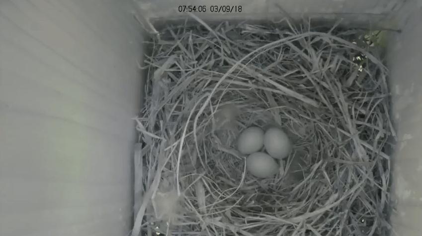 Follow Nest Box Activity on our Live Stream