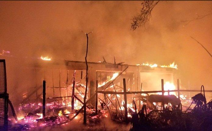 Dozens of Animals Die in Fire at Second Chance Wildlife Sanctuary