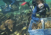 Federal Officials Want $100M for Reef Restoration in Florida Keys