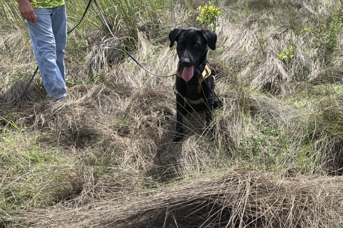 Florida's new python-sniffing dogs have 1st success