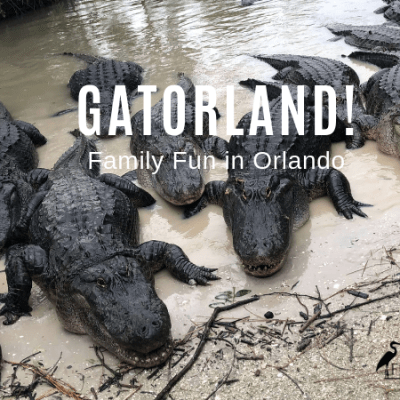 Family Fun at Orlando's Gatorland