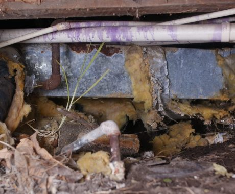 10 Reasons to Clean Your Florida Crawl Space in Winter
