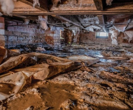 The Ins and Outs of a Crawl Space Inspection