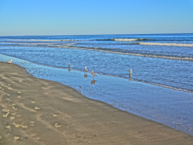 Marriott surfwatch resort hilton head island review for Hilton head surf fishing