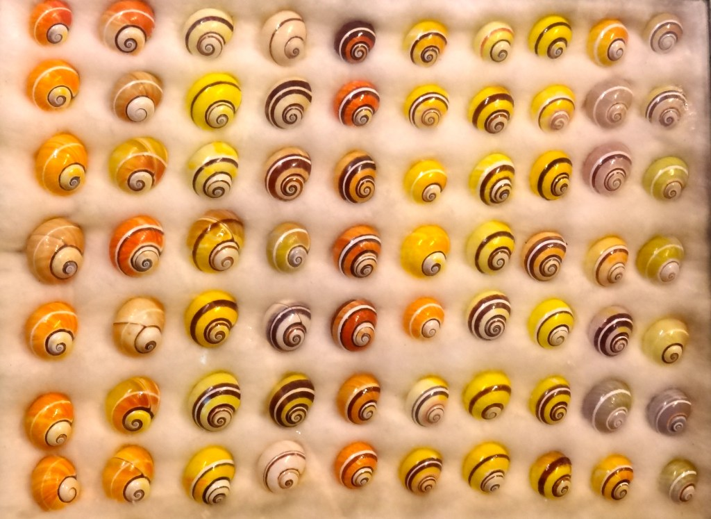 Bright colorful shells on display at Bailey Matthews Shell Museum
