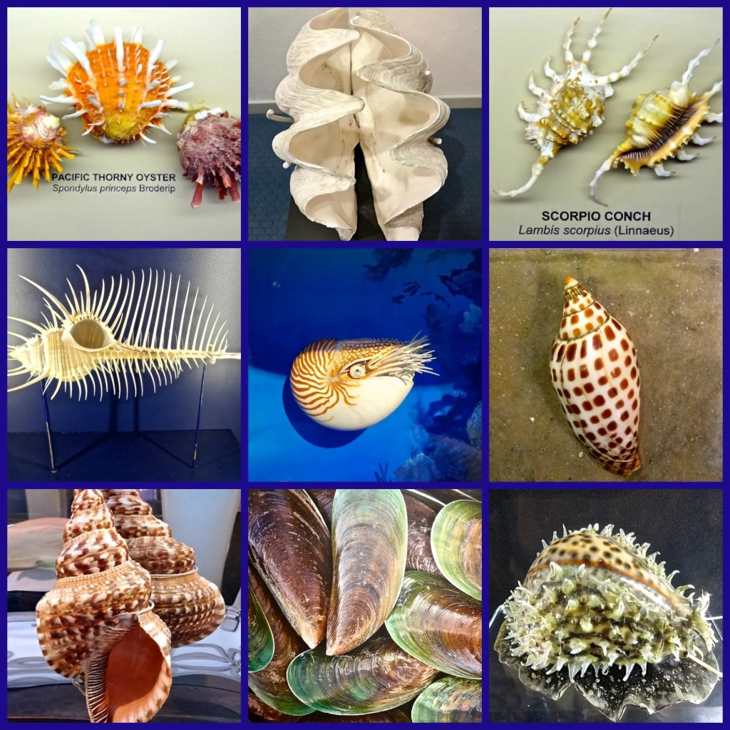 Exotic & Rare Shells at Bailey Matthews Shell Museum