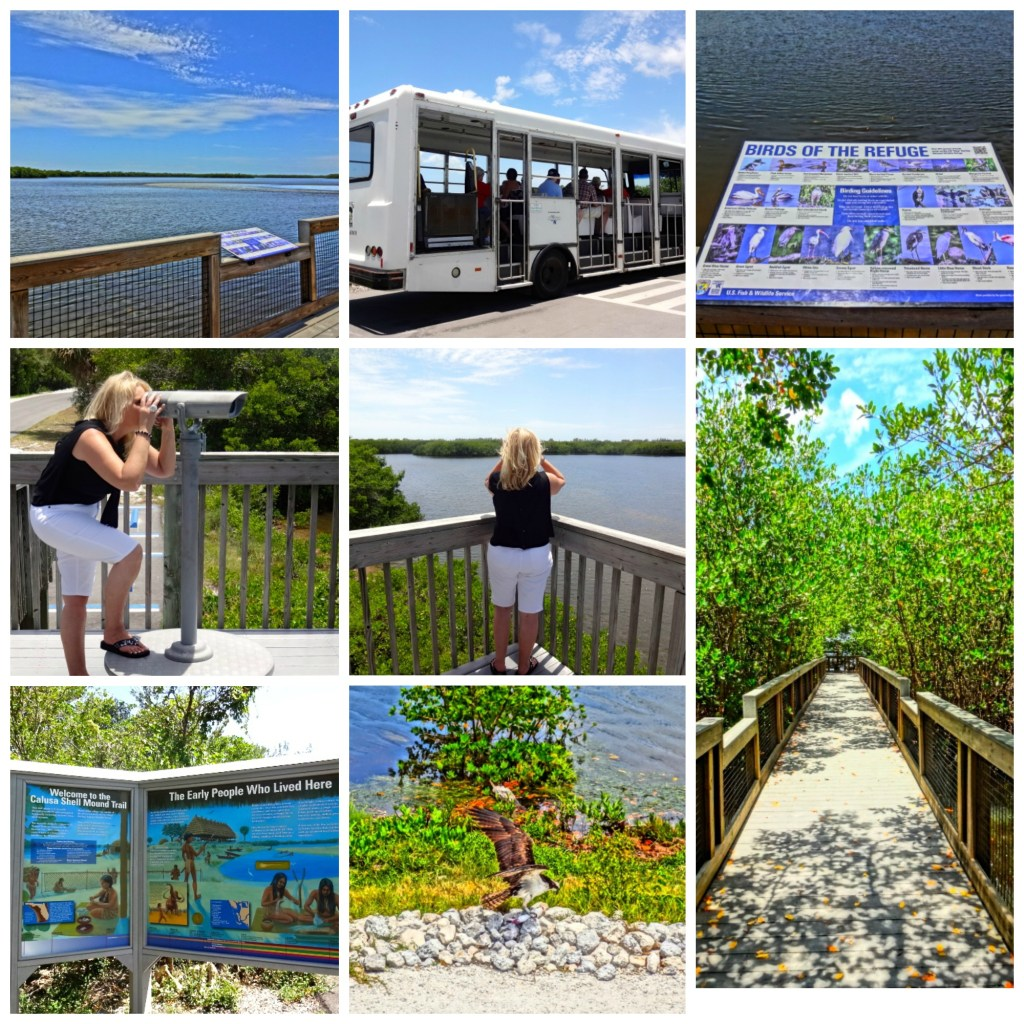 "Photo collage from J. N. ""Ding"" Darling National Wildlife Refuge on Sanibel Island"