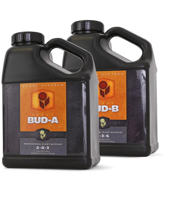 Heavy 16 Bud A 32OZ (1L), 12/cs