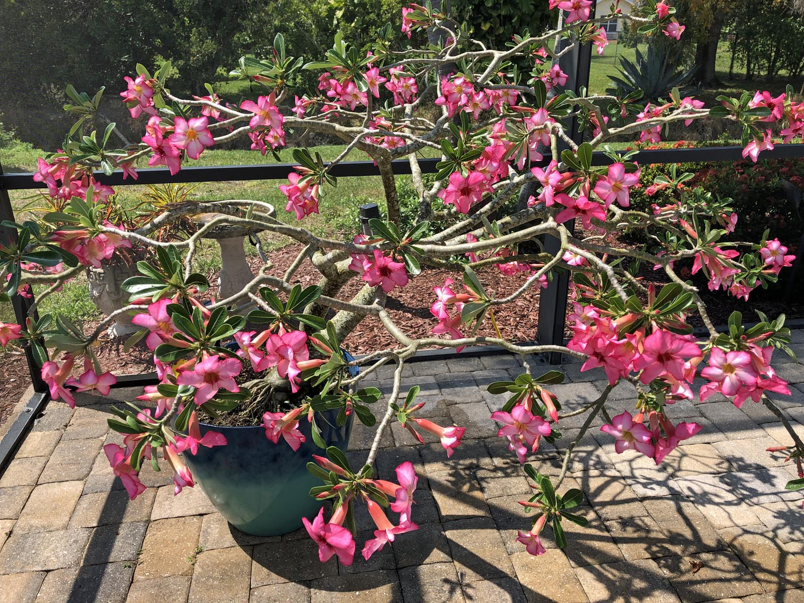 A Beautiful Sunday Meant We Enjoyed The Bloom On Our Patio
