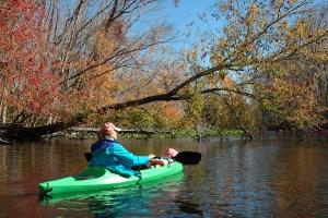 Kayaking the Ocklawaha River