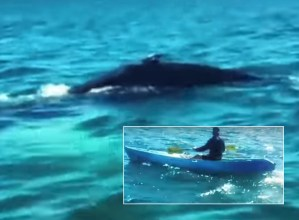 Kayaker and Whale