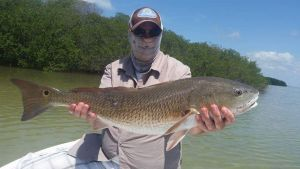 Redfish in Islamorada fl with Captain Jacob