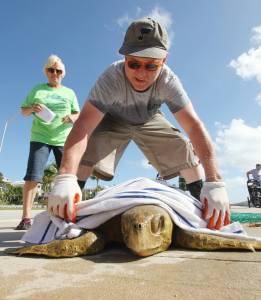 KWWC Loggerhead Turtle