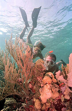 Florida Keys Snorkel