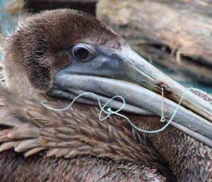 pelican fish hook Reel Remove Release