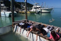 Feeding Tarpon in Kid Friendly Florida Keys