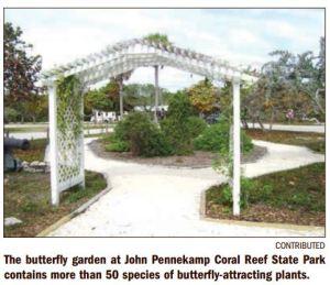 Florida Keys Butterflies
