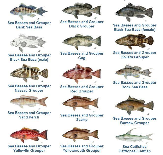 Grouper Fishing Species