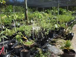 Plant Clinics