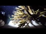 Coral Reef Spawning