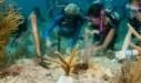 Scuba Divers Looking at the Coral in the Florida Keys Ten Keymandments