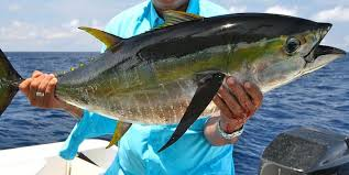 FWC approves blackfin tuna rule changes