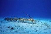 Fishing Humor Pet Lobsters