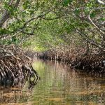 Free Guided Photography Hikes at Weedon Island Preserve