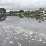 St. Pete crews collect more than 6 tons of dead fish as red tide continues 💥😭😭💥