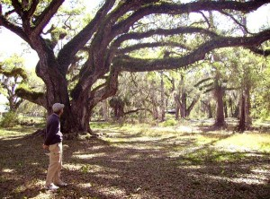 Florida history: Peaceful scene at Dade Battlefield Park in Busnell, Florida