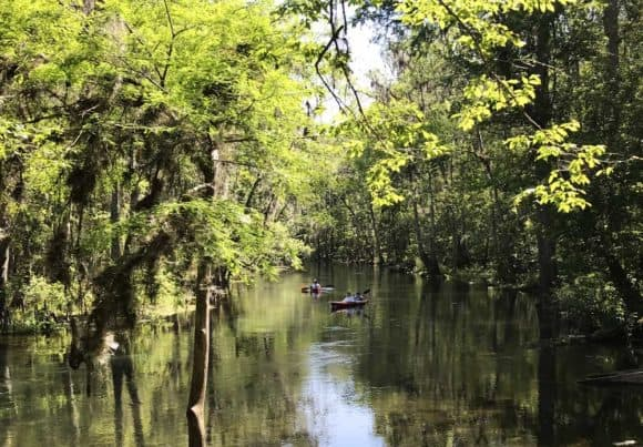 The scenic Ichetucknee River. (Photo: Bonnie Gross)