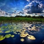 Grassy Waters Preserve, photo by Kimo