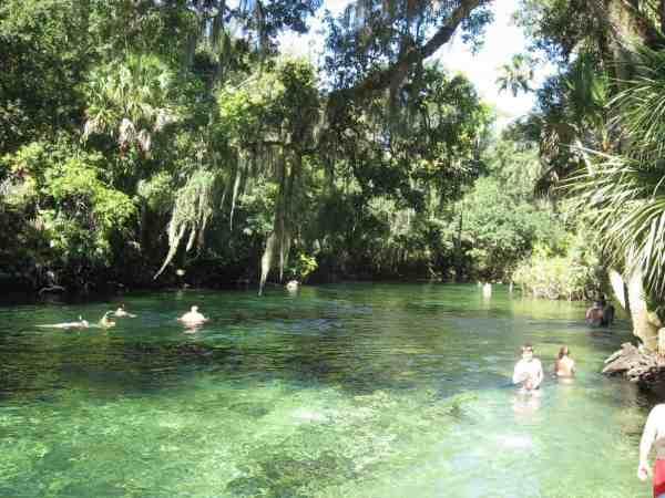Swimming in Blue Spring Run