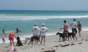 Dogs rule at Walton Rocks Beach on Hutchinson Island