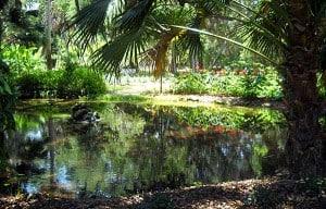 Gardens at Washington Oaks Gardens State Park