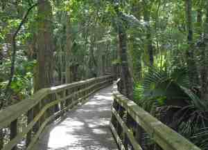 Cypress Swamp Trail at Highlands Hammock State Park in Sebring.