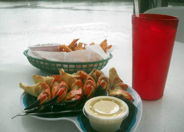 Stone crabs in Everglades City